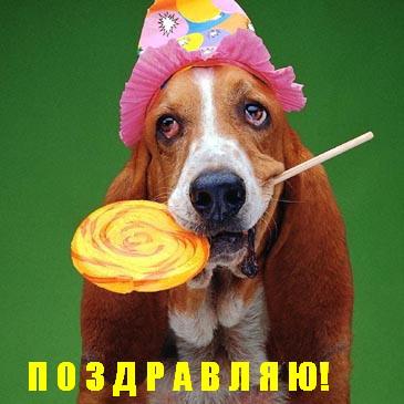 Открытка с днем рождения с животными прикольными 99