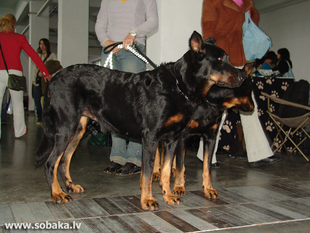 Boserons 