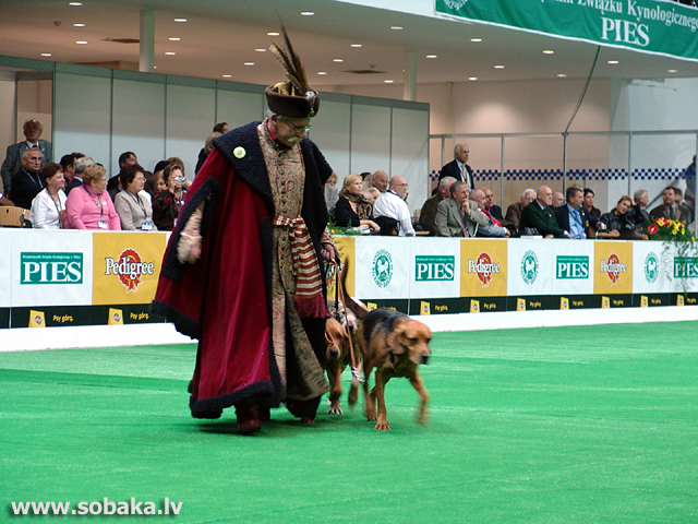 Poļu dzinējsuns 