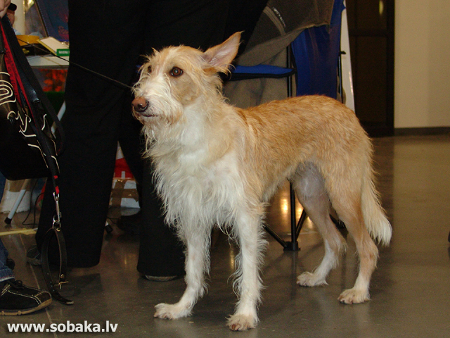 Autors - Sobaka.lv 