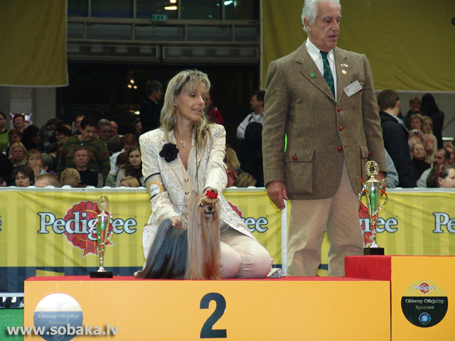 Jorkšīras terjers 