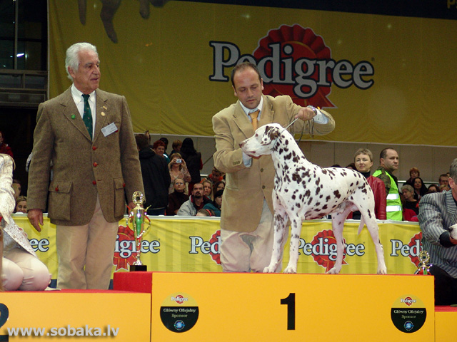 Dalmācietis 