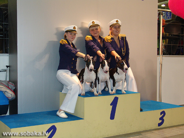 Bulterjers 