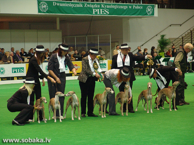 Vipets 