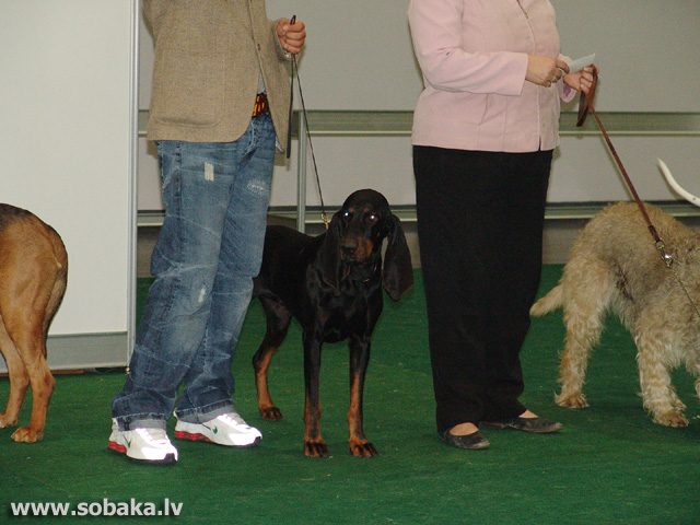 Melnlāsumainais jenotu dzinējsuns 
