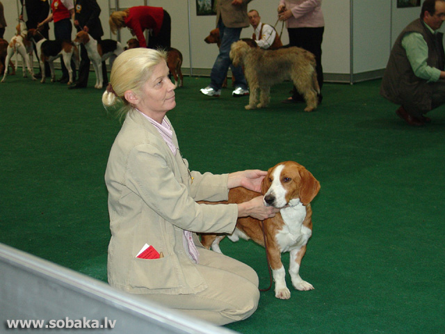 Drēvers 