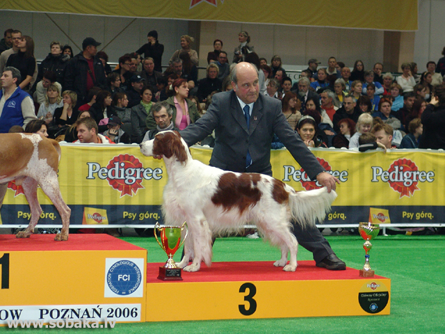 Īru sarkanbaltais seters (Irish Red And White Setter)