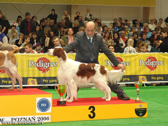 Īru sarkanbaltais seters 