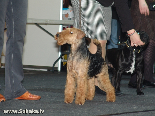 Velsas terjers 