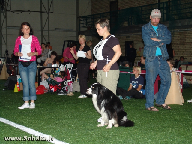 Borderkollijs 