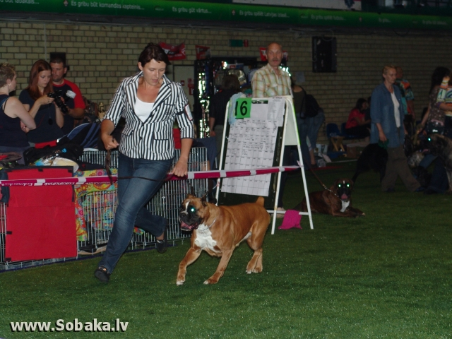 Bokseris 